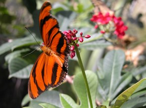 Butterfly Farm - Accommodation Port Hedland